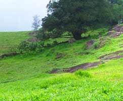 Coorg Travel Package