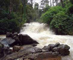 Tour Package In Coorg